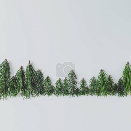 Photo for Evergreen pine forest treeline made of tree branches, Minimal winter nature concept - Royalty Free Image