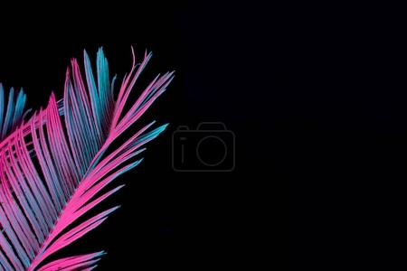 tropical and palm leaves in vibrant bold gradient holographic neon colors, Concept art, Minimal surrealism