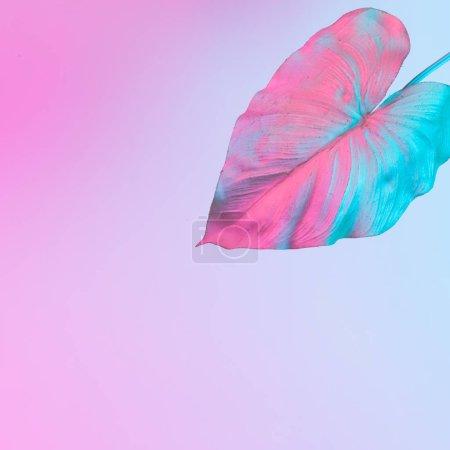 Photo pour Feuille tropicale en dégradé gras vibrant couleurs néon holographique, Concept art, Surréalisme minimal - image libre de droit