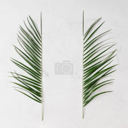 creative tropical leaves isolated on white background, minimal summer concept