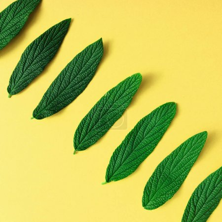 Photo for Green exotic leaves on yellow background, minimal summer concept - Royalty Free Image