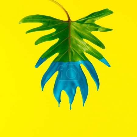 Green tropical leaf with blue paint  on yellow background. Minimal summer exotic concept.