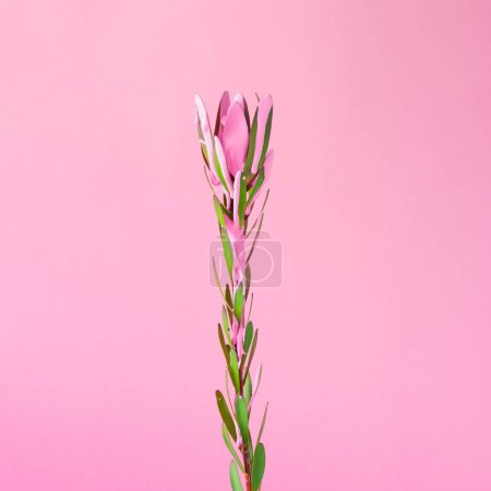 Photo pour Fleur avec peinture rose goutte à goutte. Concept exotique estival minimal avec espace de copie . - image libre de droit