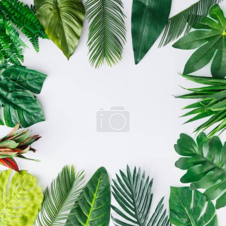 Creative layout made of tropical leaves on white background. Minimal summer exotic concept with copy space. Border arrangement.