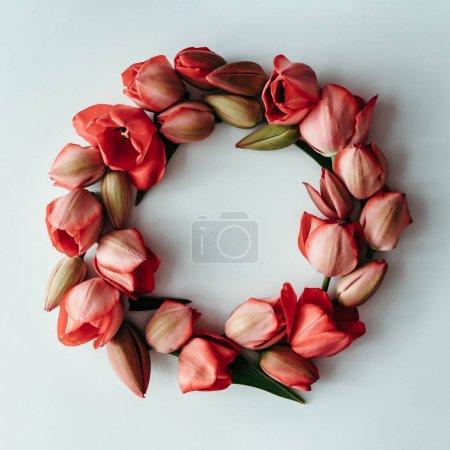 Foto de Estilo minimalista naturaleza muerta con flores de tulipán en fondo blanco. Endecha plana. - Imagen libre de derechos