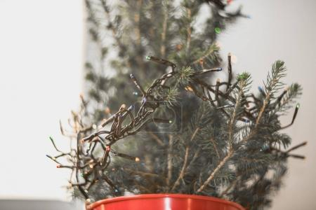 Little Christmas tree in red bucket on white table