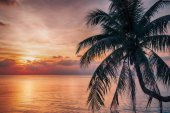 Beautiful sunset over the sea with coconut palm above sea.