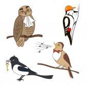Set of cartoon birds Owl woodpecker magpie nightingale