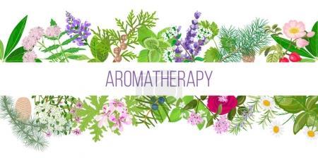 Illustration for Big banner set of popular essential oil plants. Ornament with text aromatherapy. Peppermint, lavender, sage, melissa, Rose, Geranium, Chamomile, oregano etc. For cosmetics, spa health care perfumery - Royalty Free Image