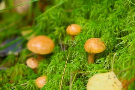 beautiful raw edible mushroom in forest