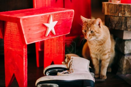 orange cat near ice skates