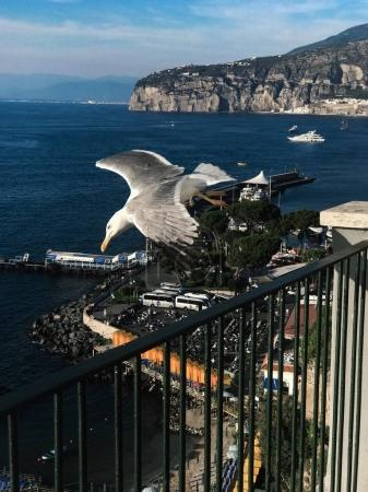 flying seagull in Italy