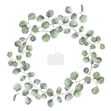 Watercolor wreath with silver dollar eucalyptus branch. Hand painted floral illustration with round leaves isolated on white background. For design or print