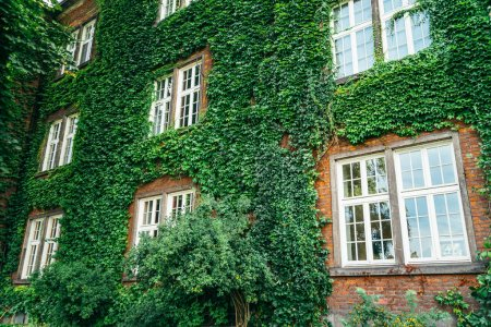 Old brick building full frame overgrown with ivy
