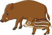 Cartoon wild boar and piglet