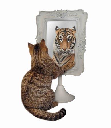 Katze starrt auf ihr lustiges Spiegelbild