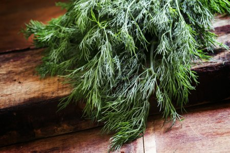 Photo for Fresh dill on an old birch board, close up - Royalty Free Image