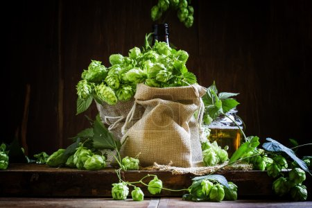 Hops in canvas bags