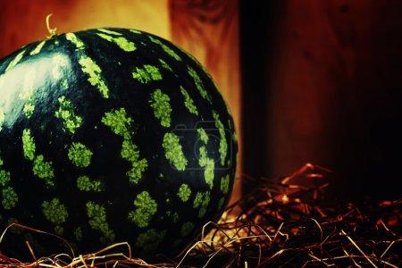 Uncut striped watermelon