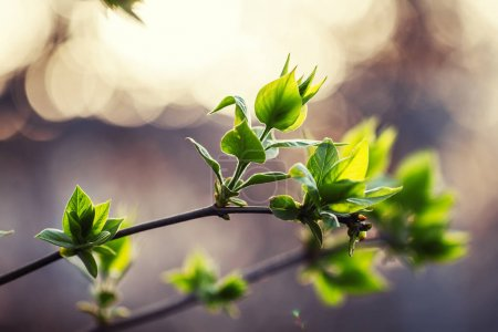 Spring natural background with young green leaves