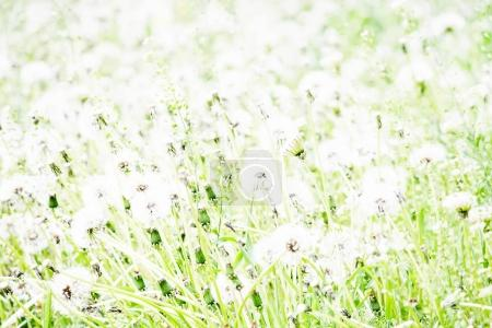 Partially blurred natural summer background