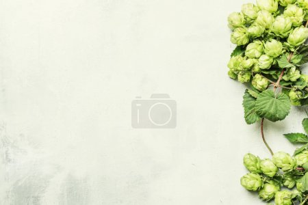 Autumn background with hop cones