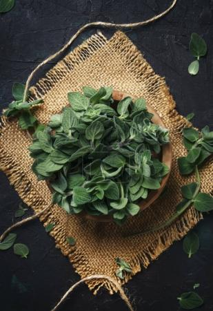 Fresh green oregano or Origanum vulgare in a beam, brown background, top view