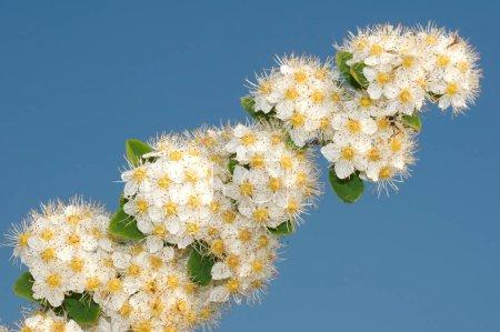Wild flowers of Siberia. Lake Baikal, Siberia