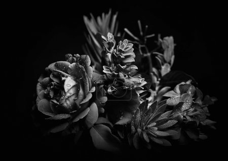 Photo for Black and white bouquet studio backdrop shot - Royalty Free Image