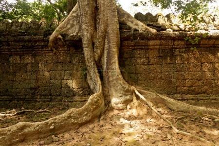 old ruins Angkor Wat