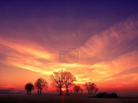 Colorful countryside sunrise with trees