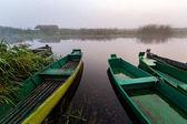 Narwianski Park Narodowy, mglisty poranek