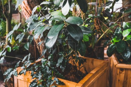 Photo pour Jardin botanique. Plantes vertes en pots. Pépinière. - image libre de droit