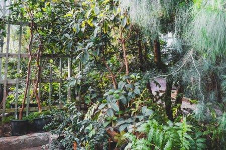 Photo pour Jardin botanique. Plantes et arbres verts en serre. Pépinière. - image libre de droit