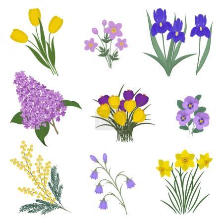 Illustration pour Collection de fleurs jaunes et violettes sur fond blanc. Il y a des mimosa, des tulipes, des cloches, des pansies, des iris, des lilas, de l'anémone, des crocus et des jonquilles sur la photo. Illustration vectorielle . - image libre de droit