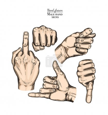 Illustration for Set of hand gestures. Vector iIllustration isolated on white background. Engraving style. - Royalty Free Image
