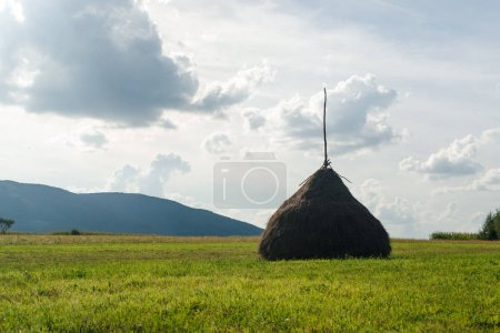 Hay in stacks. Autumn rural landscape.
