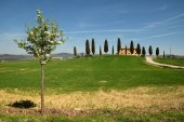 PIENZA, TUSCANY / ITALY - MAR 31, 2017: tuscany landscape, farmland I Cipressini, italian cypress trees with rural white road in spring, green fields and blooming tree. Located in Siena countryside.