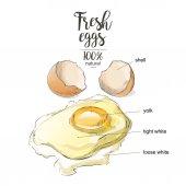 Egg a cracked egg with an egg shell egg yolk and egg white