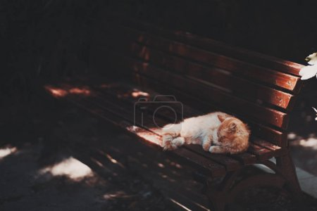 Photo for Ginger kitten is laying and sleeping on the bench of chestnut color in a dark place of a park with several bright spots from sun, warm summer day - Royalty Free Image