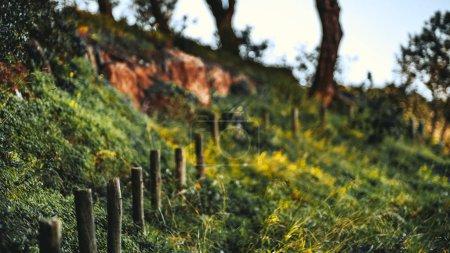 Un montón de postes de madera en una colina
