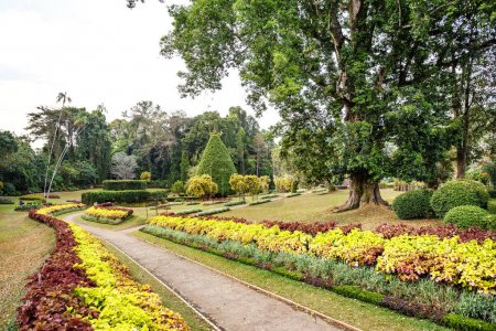 Beautiful nature in Peradeniya