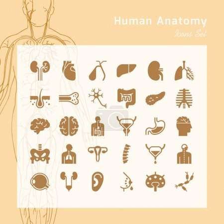 Illustration for Set of vector icons of internal human organs in a glyph style isolated with background of human body illustration in liner style. - Royalty Free Image