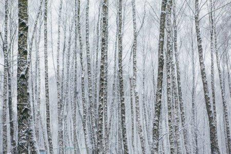 Photo pour Tempête de neige dans le parc, paysage d'hiver - image libre de droit
