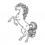 Rearing horse with curly tail and mane Horse stood up on its hind legs Sketch isolated on white background EPS10 vector illustration