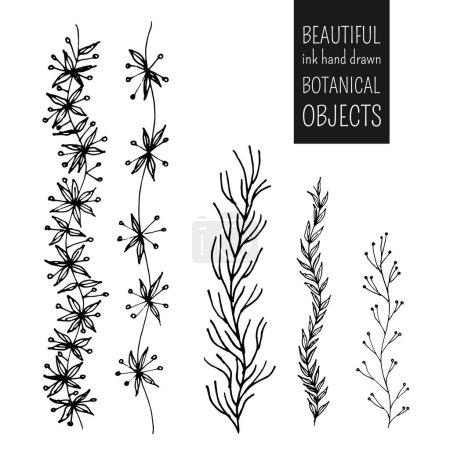 Illustration for Beautiful ink hand drawn botanical objects set, vector illustration - Royalty Free Image