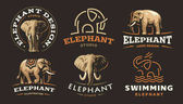 Set elephant logo - vector illustration emblem design on dark background