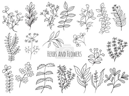 Illustration for Set of branches, flowers and herbs with leaves Isolated on white background. Hand drawn vector decorative elements can be used for holiday cards, wedding invitation, postcard, flyer, banner or website - Royalty Free Image