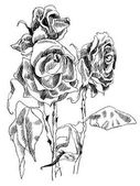 A drawing of dried roses black and white picture