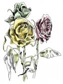 A drawing of dried roses Colorfull picture